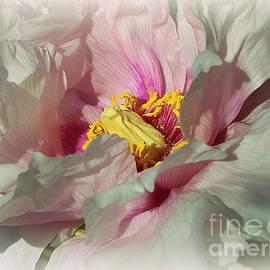 Pink Peony Beauty by Dora Sofia Caputo Photographic Design and Fine Art