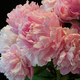Pink Peony Passion  Luscious Garden Bouquet by Nancy Jacobson