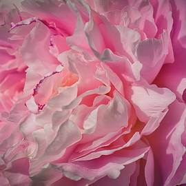 Pink Peony Perfection by Cathy Mahnke