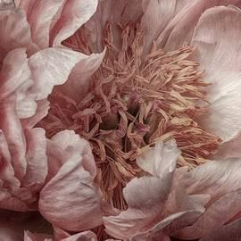 Pink Piony by Nicole Wiggerman