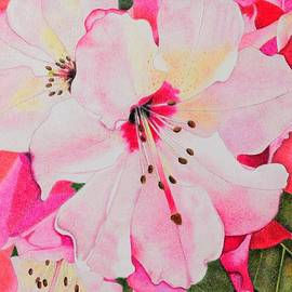 Pink Rhododendrons by Sharon Patterson