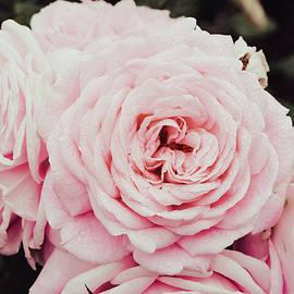 Pink Romance 1 by Saam Sadeghi