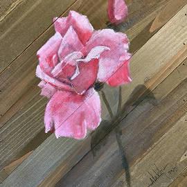 Pink Rose by Alan Lakin