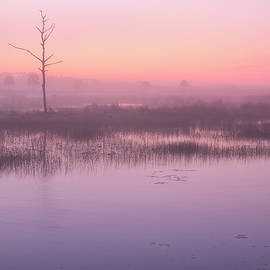 Pink Sunrise by Bill Chambers