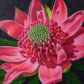 Pink Waratah Beauty, 1 by Fiona Craig