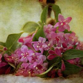 Pink wildflowers by Rita Di Lalla