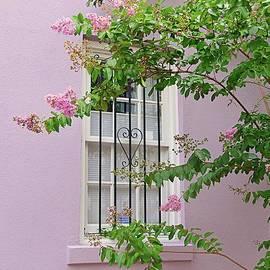 Pink Window Framing by Linda Covino