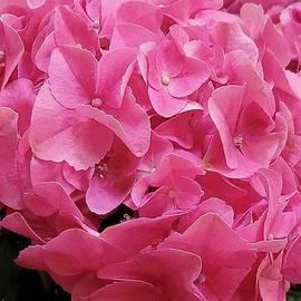 Pink Wonderment by Charlotte Gray
