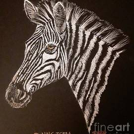 Plains Zebra by Sue Bonnar