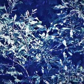 Planted Blue Abstract by Shelly Wiseberg
