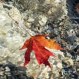Playful Patterns - Maple Leaf in Bold Orange and Vermilion Floating Underwater by Georgia Mizuleva