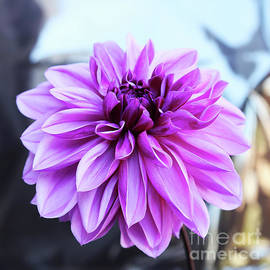 Plenty Of Purple Petals by Michael May