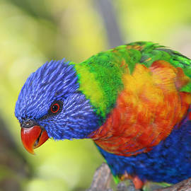 Plumage of Many Colors by Nieves Egelkraut