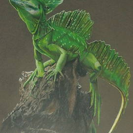 Plumed Basilisk by Barbara Keith