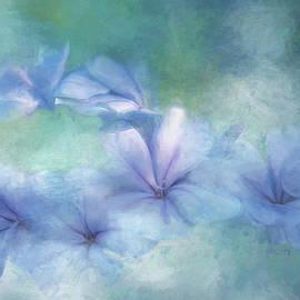 Plumbago Hedge by Terry Davis
