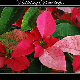Poinsettia Holiday Greetings by Marilyn DeBlock