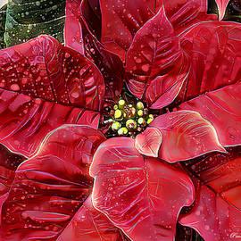 Poinsettia by Pennie McCracken