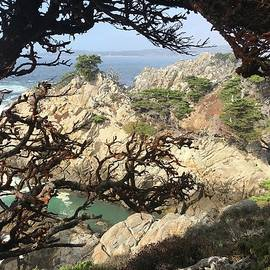 Point Lobos through the tTrees by Mark Millicent