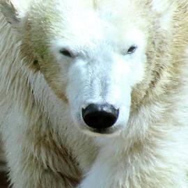 Polar Bear-7873 by Gary Gingrich Galleries