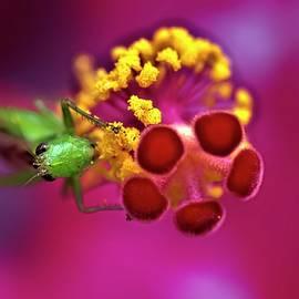Pollen Feast by Heidi Fickinger