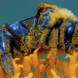 Pollen Hungry Bee by Alex Gordon