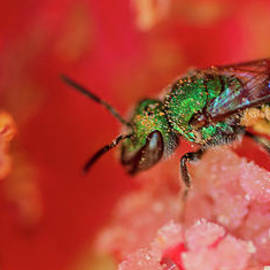 Pollinating  so you do live by Fernando Blanco Farias