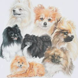 Pomeranian Montage by Barbara Keith