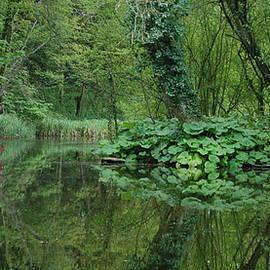 Pond Reflections 68 WF by Lynne Iddon