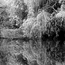 Pond Reflections 69 BW WF by Lynne Iddon