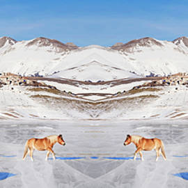 Ponies in  snowy plateau roaming on a frozen cracked lake by Flavio Vieri