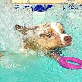 Pool Pup - study photo