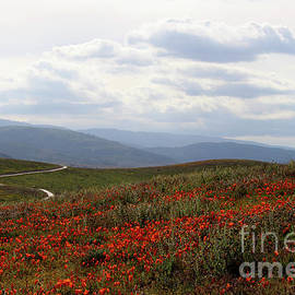 Poppies and Trail by Katherine Erickson