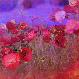 Poppies On Blue by Jeff Burgess
