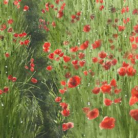 Poppy field by Olivia Checiu