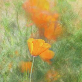 Poppy Landscape by Terry Davis