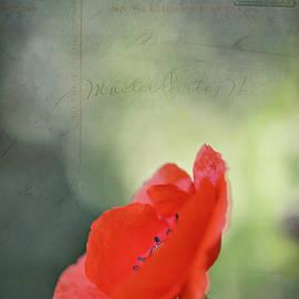 Poppy, Red Oriental by Gary McJimsey