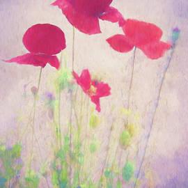 Poppy Spring by Terry Davis