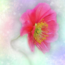 Poppy Watercolor by Patti Deters