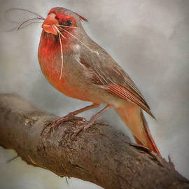 Portrait of a Desert Cardinal by Teresa Wilson
