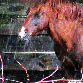 Portrait Of A Horse Under Cover In A Sleet Storm by Patricia Keller
