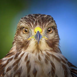 Portrait of a Raptor by Mark Andrew Thomas