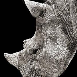 Portrait of a Rhinoceros I I I  by Jim Fitzpatrick