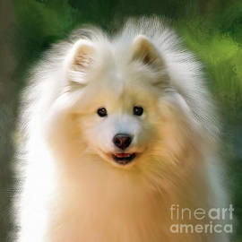 Portrait Of A Samoyed by Lois Bryan