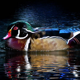 Portrait of a Wood Duck by Mark Andrew Thomas