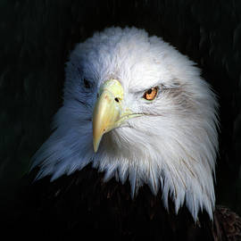 Portrait of an Eagle by Mark Andrew Thomas
