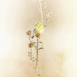 Portrait of the Goldfinch by Elizabeth Winter