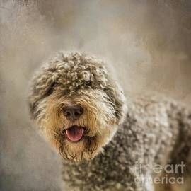 Portuguese Water Dog by Eva Lechner