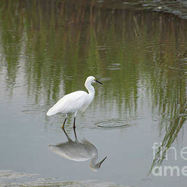 Posing Reflection by Ruth H Curtis