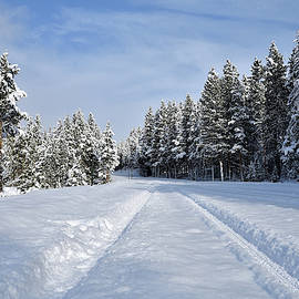 Powdered Road by Michael Morse