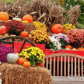 Powerful Autumn Display by Ruth H Curtis